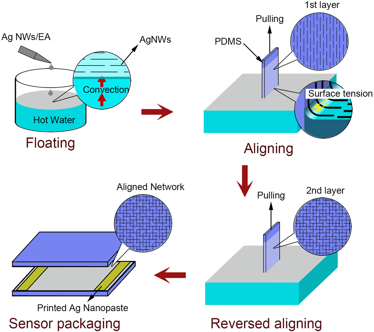 44a073ac Highly Sensitive and Transparent Strain Sensors with an Ordered Array  Structure of AgNWs for Wearable Motion and Health Monitoring | Scientific  Reports