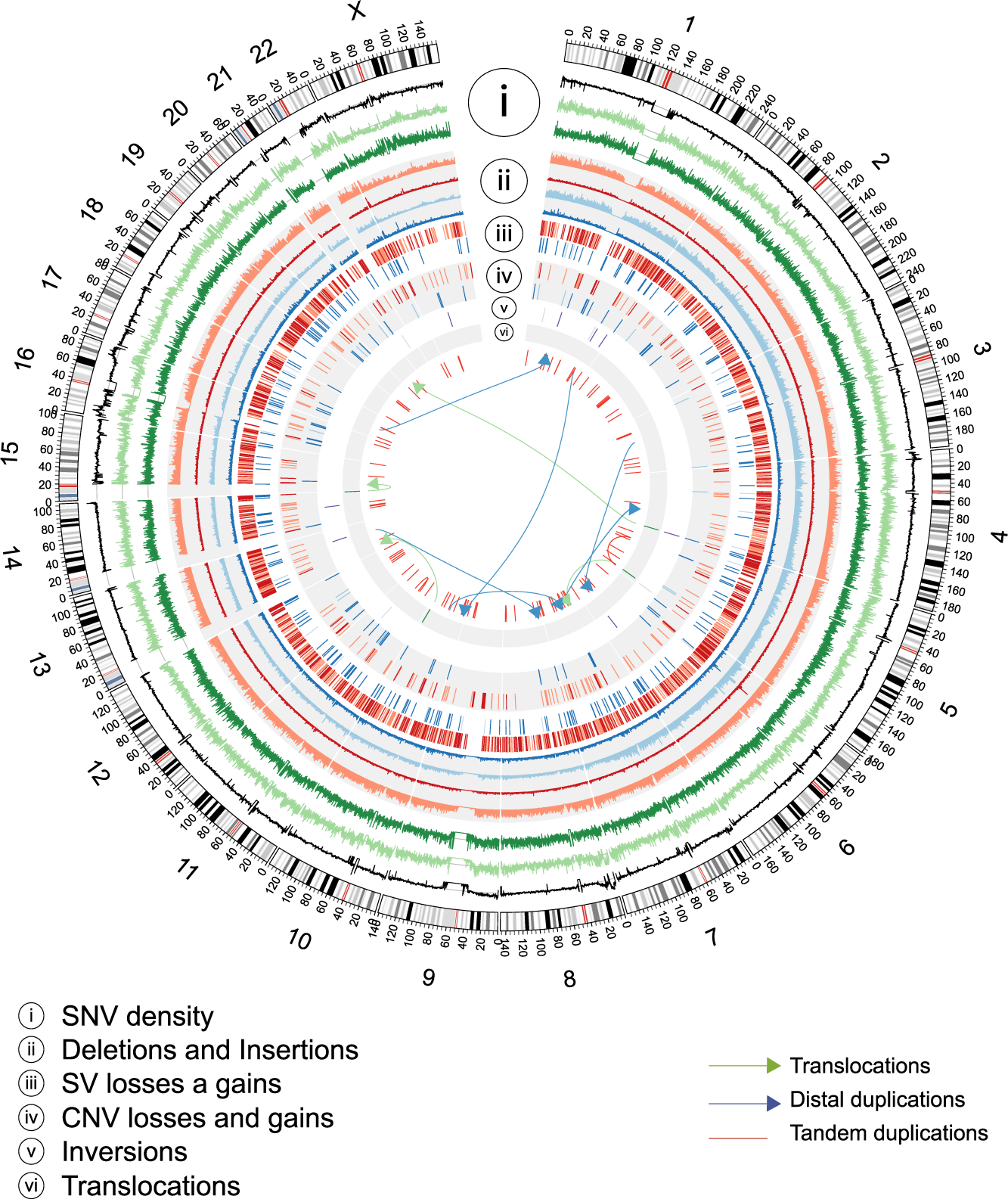 Whole Genome Sequence, Variant Discovery and Annotation in