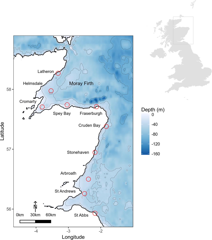 Seasonal and diel acoustic presence of North Atlantic minke