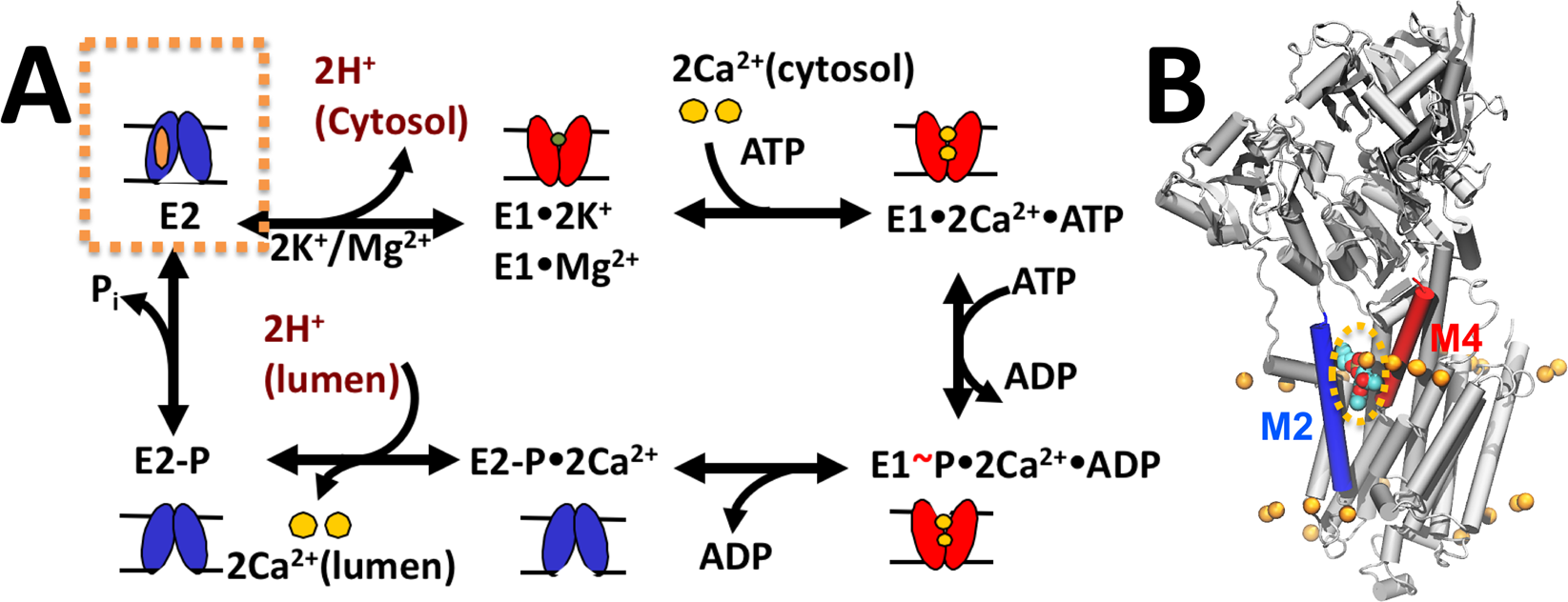 Probing the effects of nonannular lipid binding on the stability of