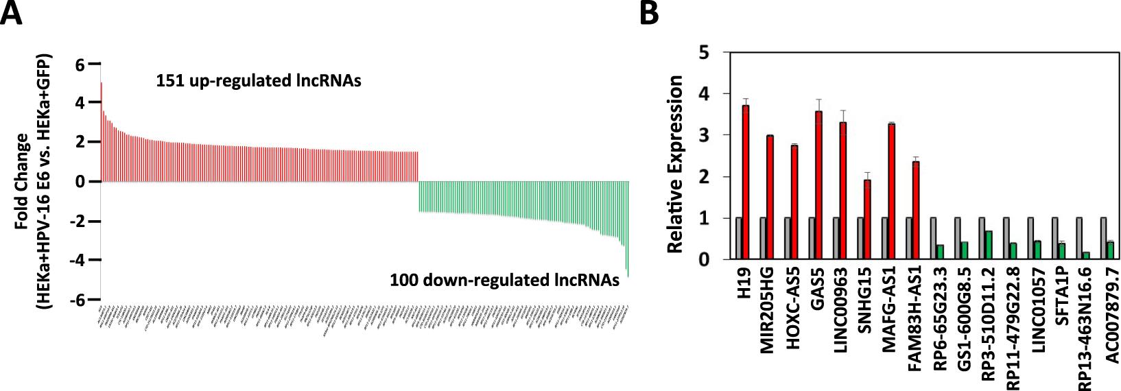 papillomavirus 16 oncoprotein