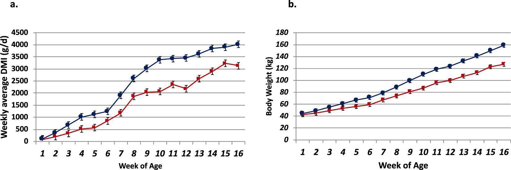 Transcriptome analysis of rumen epithelium and meta