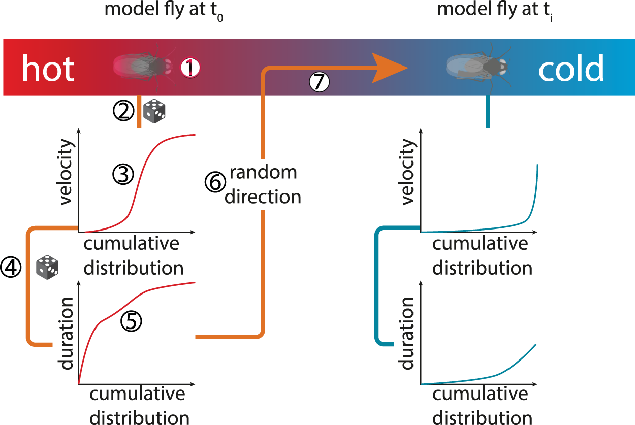 Correcting locomotion dependent observation biases in