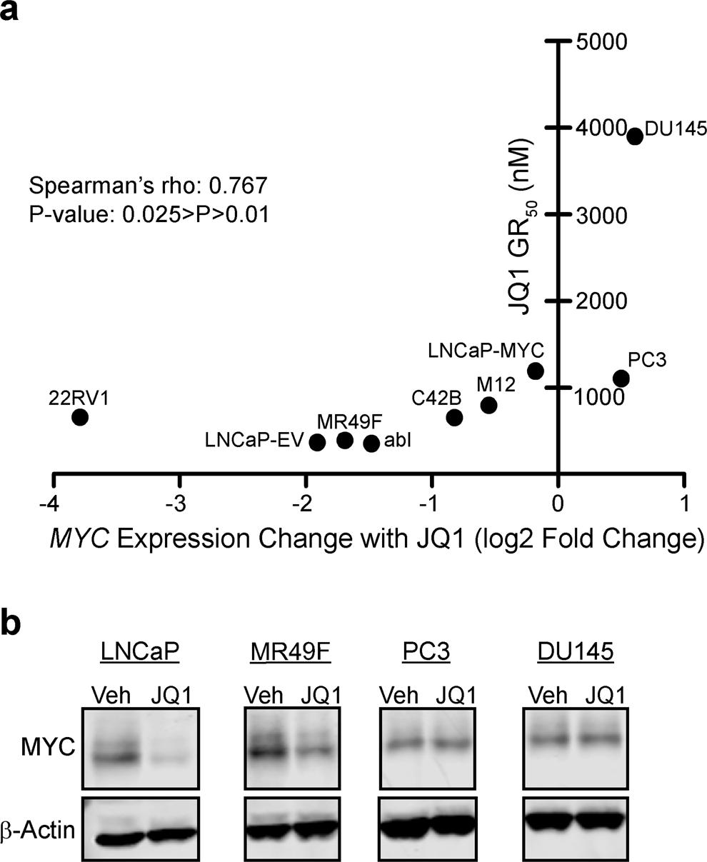 Maintenance of MYC expression promotes de novo resistance to