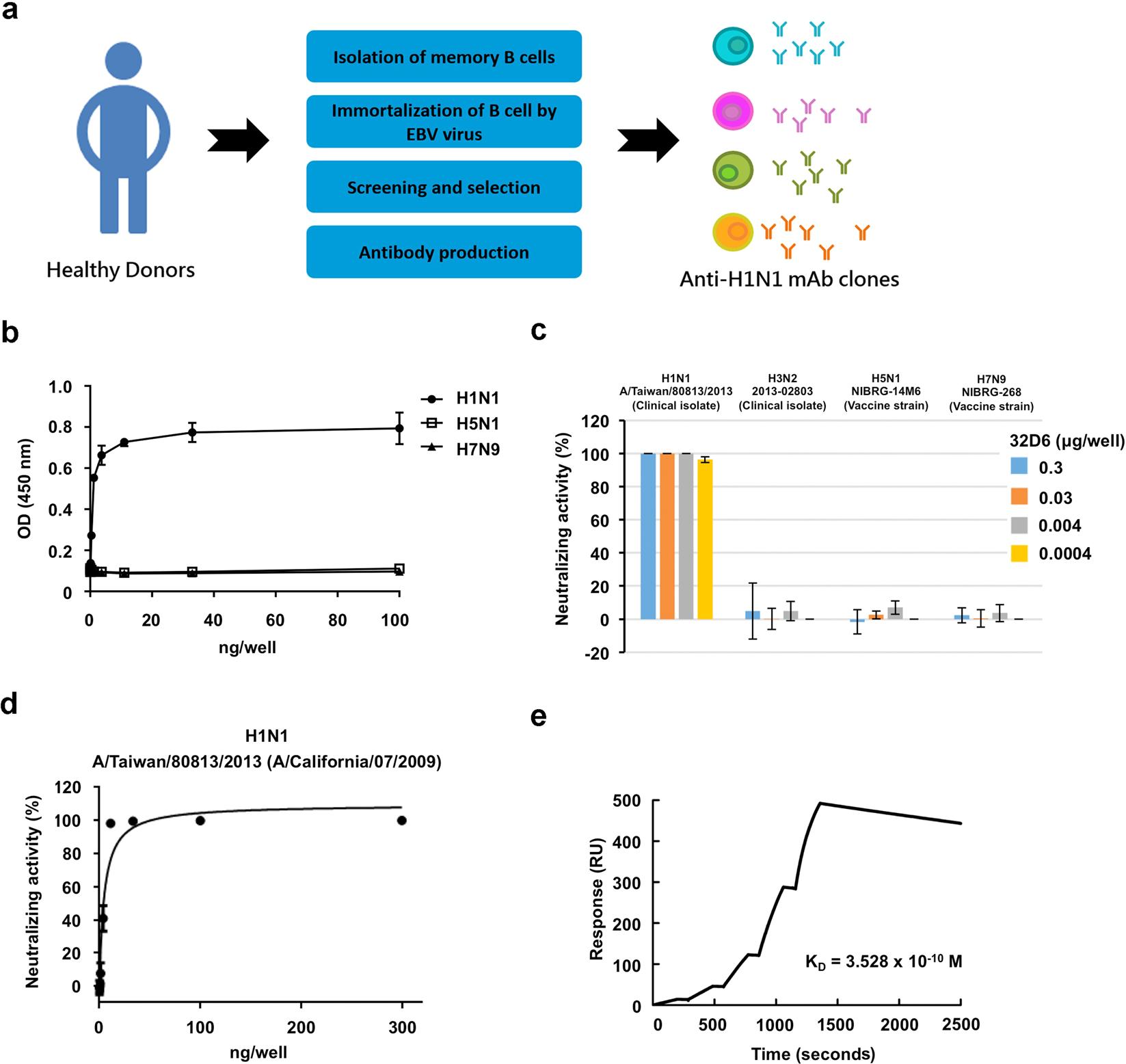 An Effective Neutralizing Antibody Against Influenza Virus