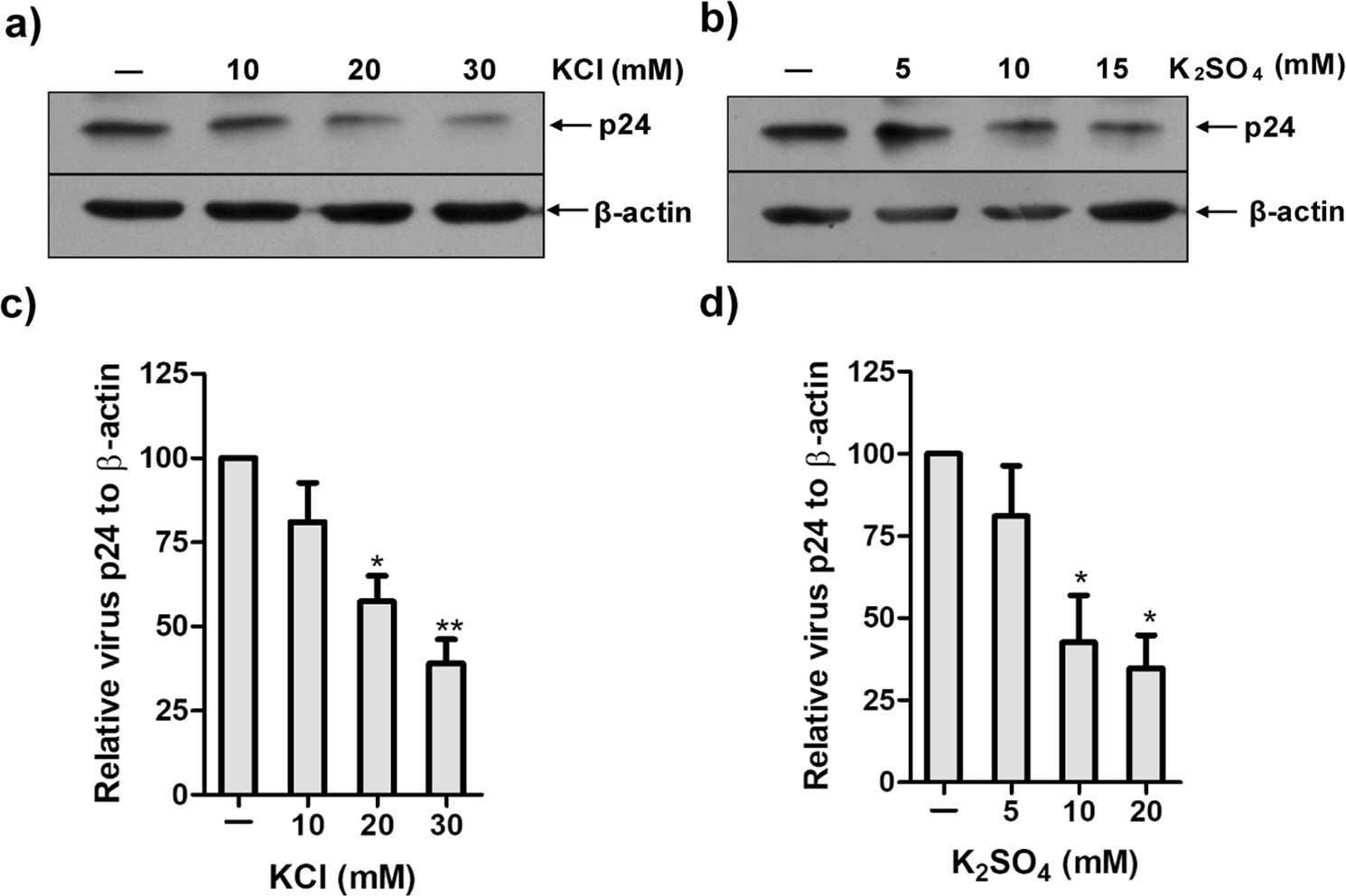 G protein-coupled and ATP-sensitive inwardly rectifying