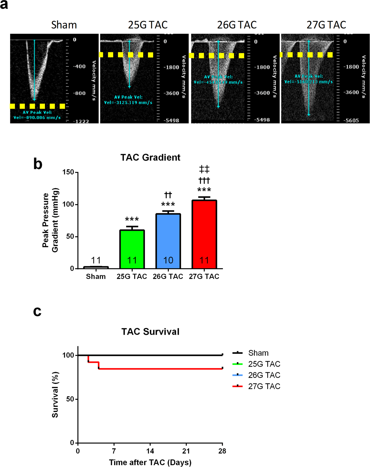 Distinct Phenotypes Induced by Three Degrees of Transverse Aortic