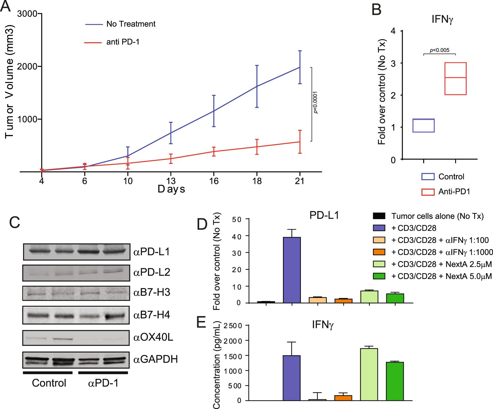 Selective HDAC6 inhibitors improve anti-PD-1 immune