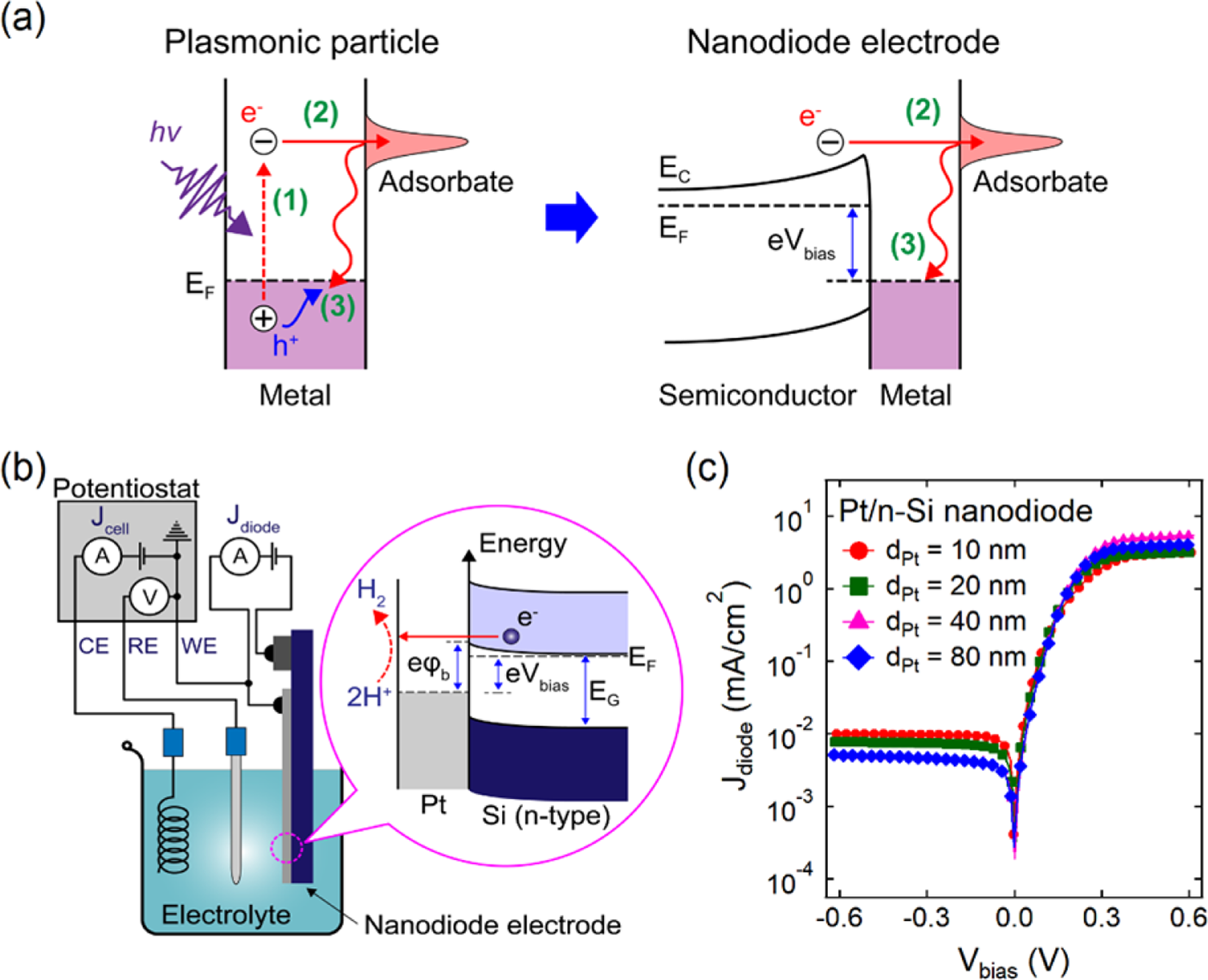 Hot electron-driven electrocatalytic hydrogen evolution reaction on