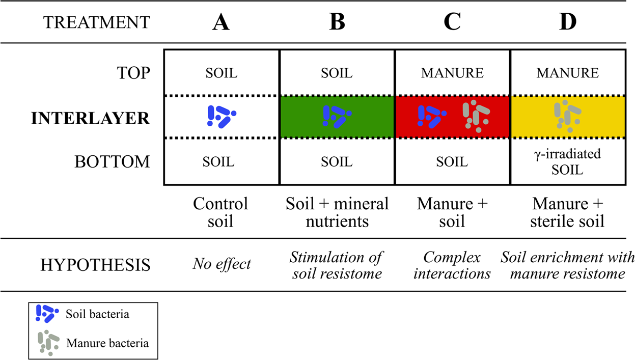 Native soil microorganisms hinder the soil enrichment with