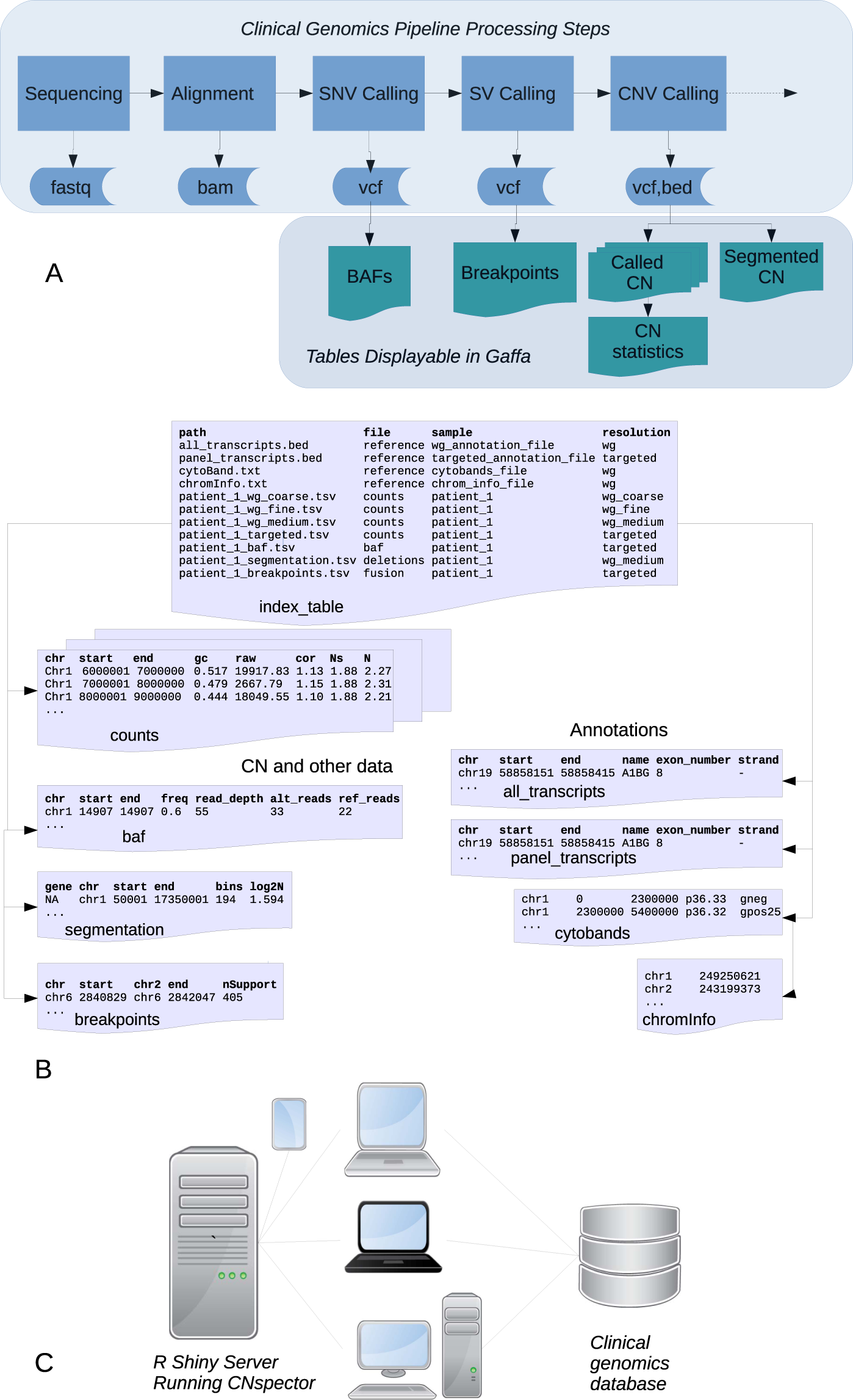 CNspector: a web-based tool for visualisation and clinical
