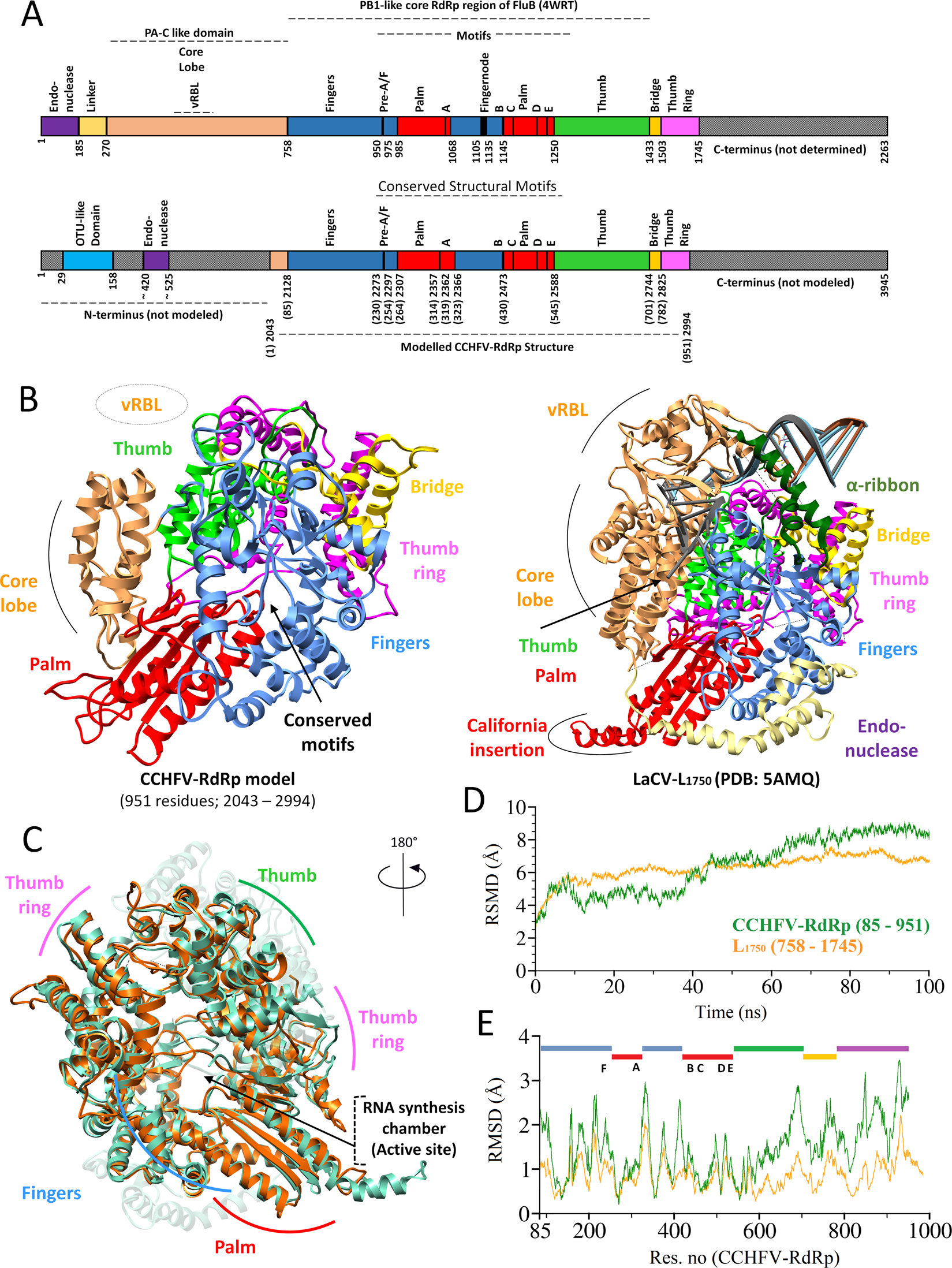 70759bcf22eb1 In silico structural elucidation of RNA-dependent RNA polymerase towards  the identification of potential Crimean-Congo Hemorrhagic Fever Virus  inhibitors ...