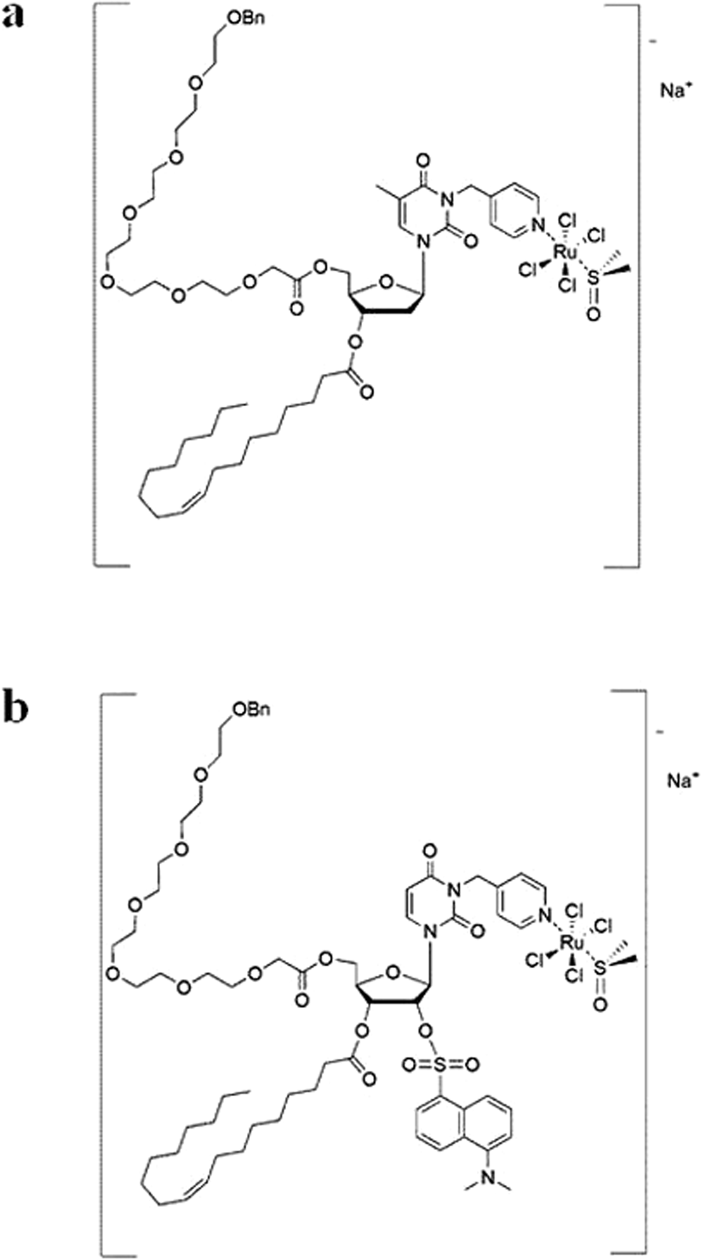 Exploring cellular uptake, accumulation and mechanism of action of a