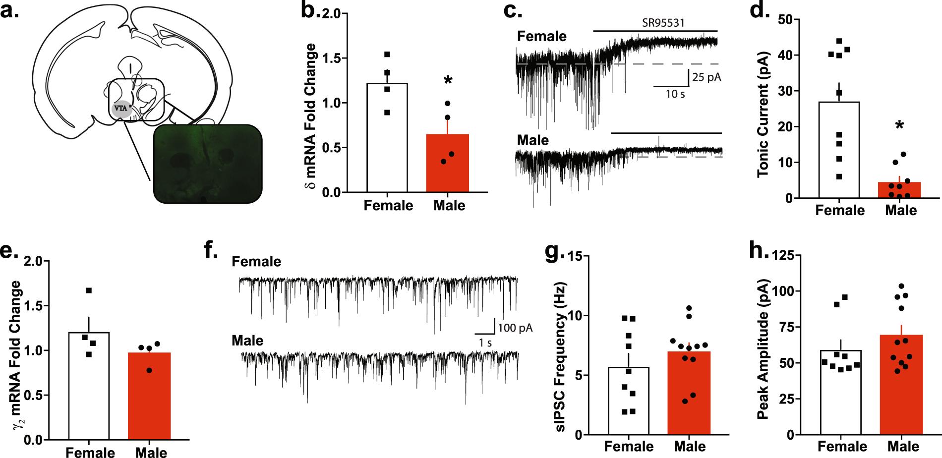 Female-specific decreases in alcohol binge-like drinking