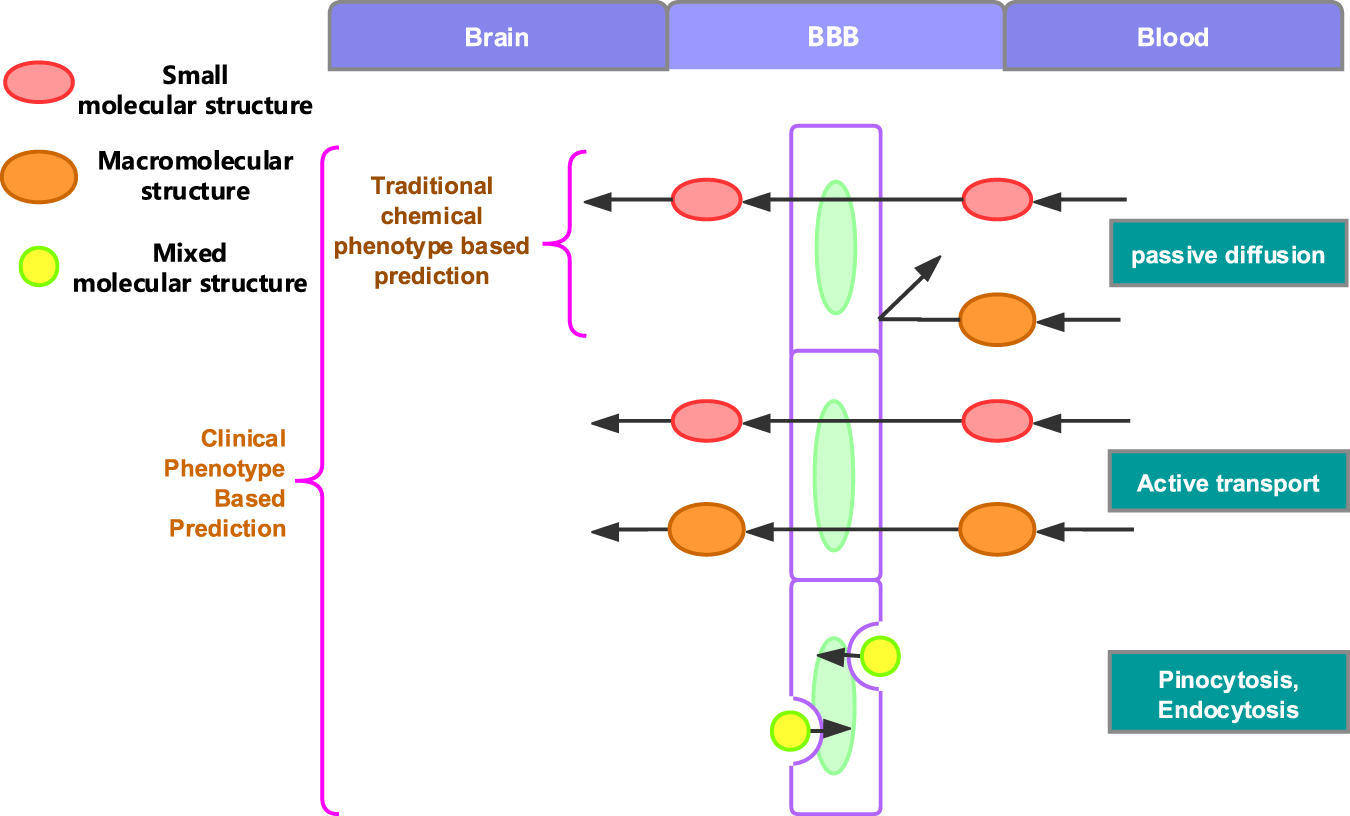 Improved Classification of Blood-Brain-Barrier Drugs Using