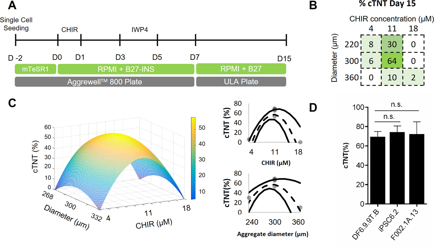 Transcriptomic analysis of 3D Cardiac Differentiation of