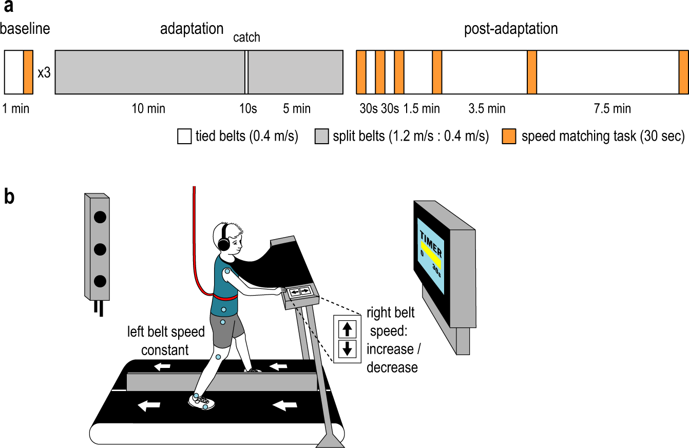 The capacity to learn new motor and perceptual calibrations develops