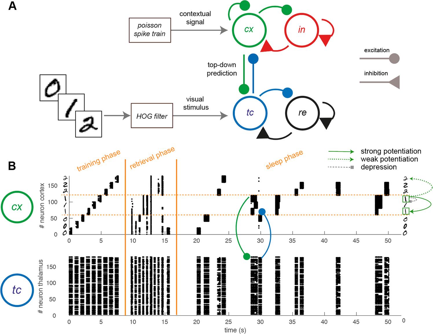 Sleep-like slow oscillations improve visual classification