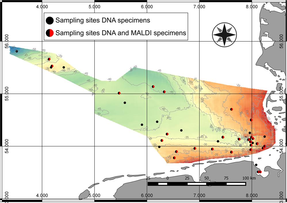 Revealing higher than expected diversity of Harpacticoida (Crustacea