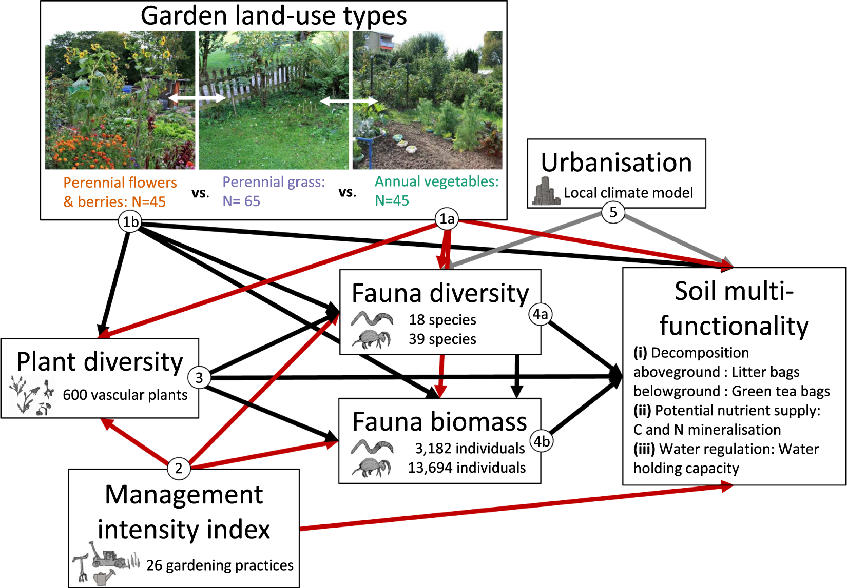 Direct and indirect effects of urban gardening on aboveground and
