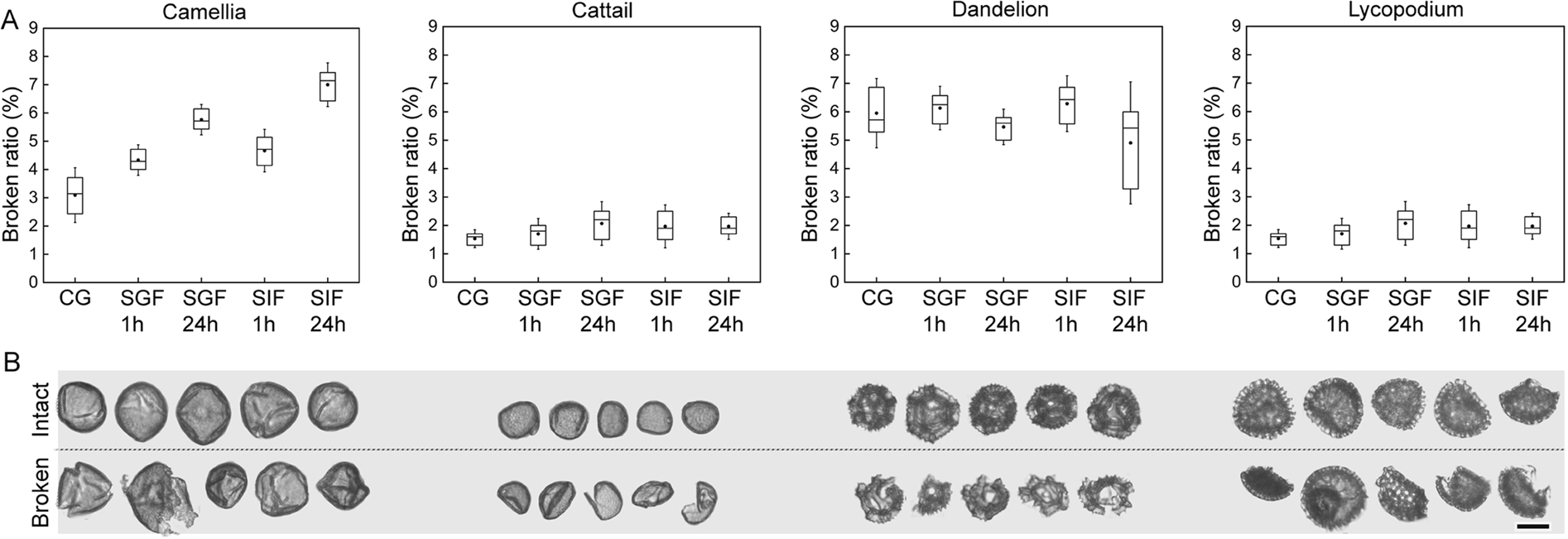 Species-Specific Biodegradation of Sporopollenin-Based