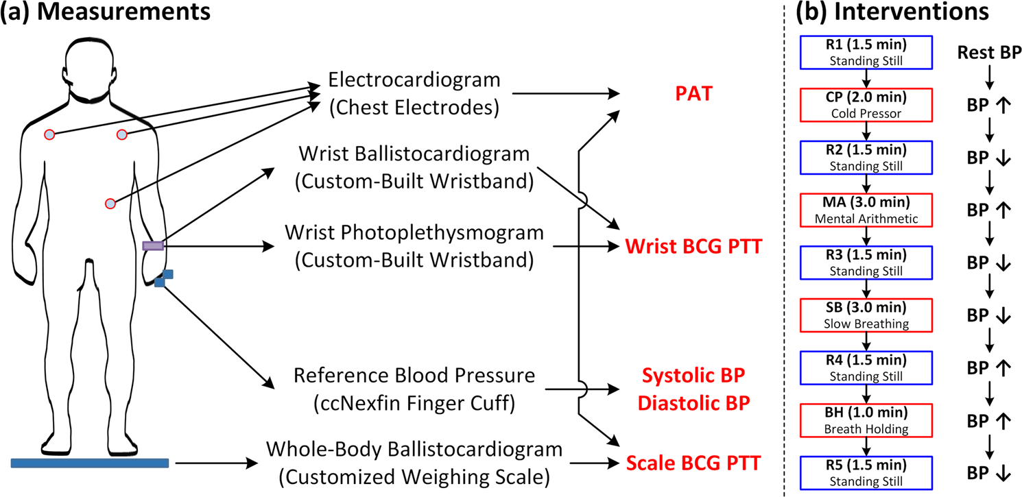 The Potential of Wearable Limb Ballistocardiogram in Blood