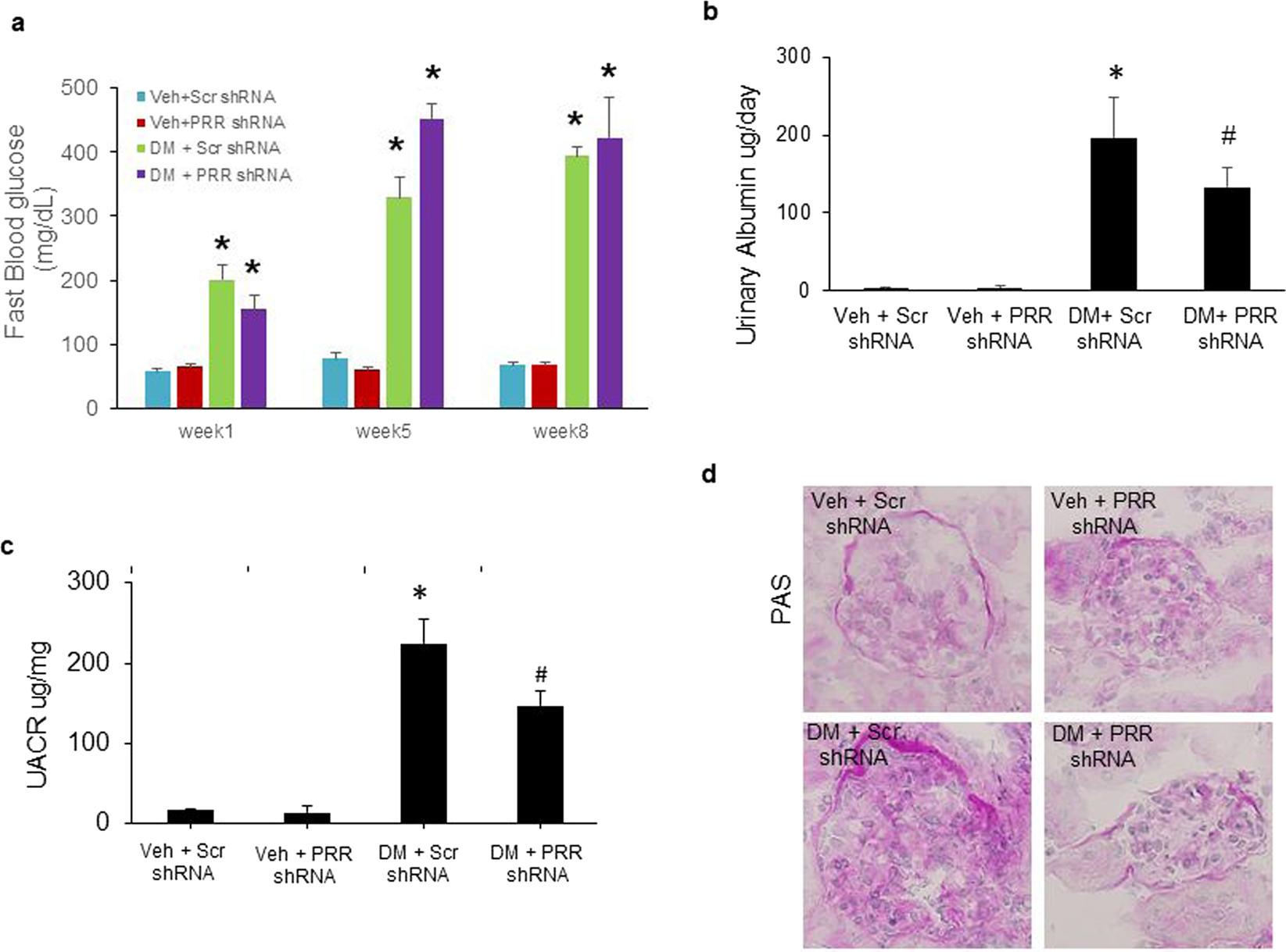 Pro)renin receptor contributes to renal mitochondria