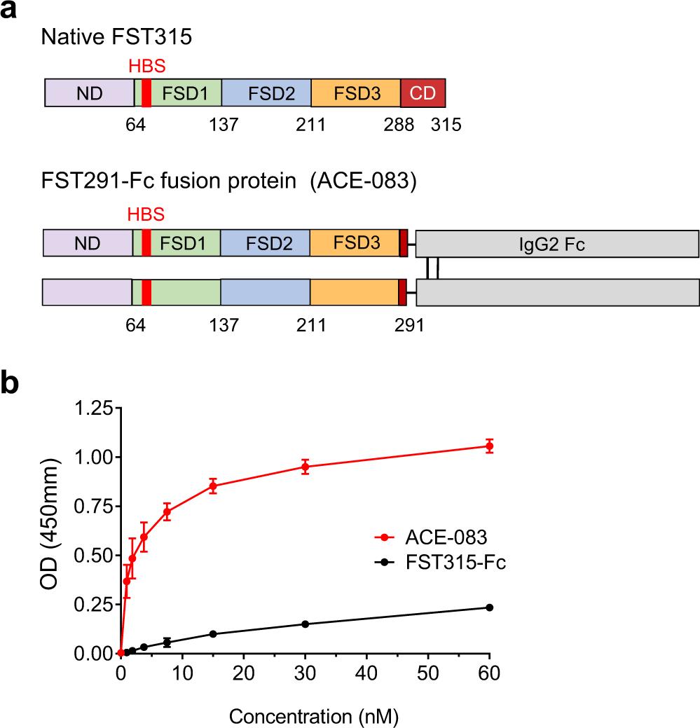 Follistatin-based ligand trap ACE-083 induces localized
