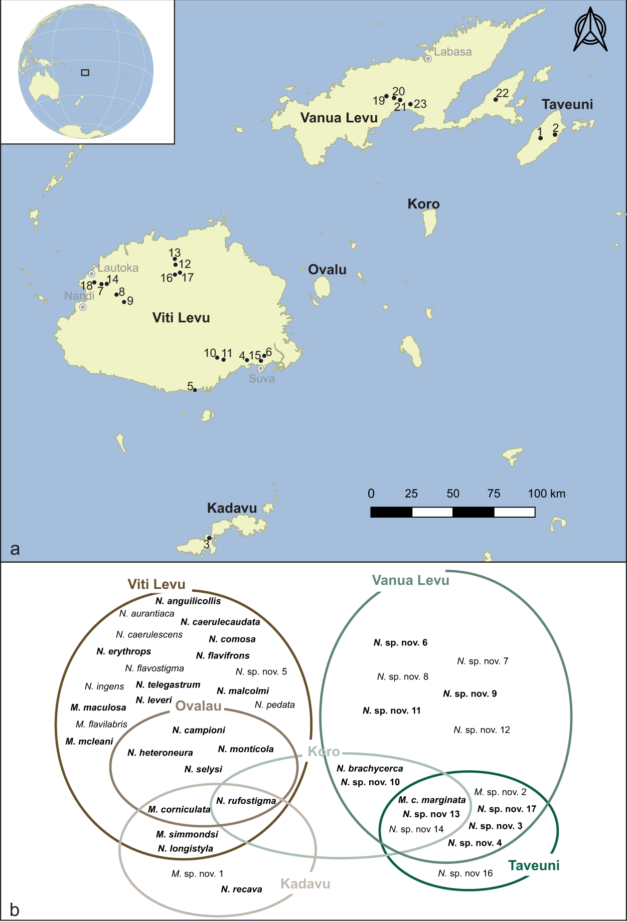 Widespread Wolbachia infection in an insular radiation of