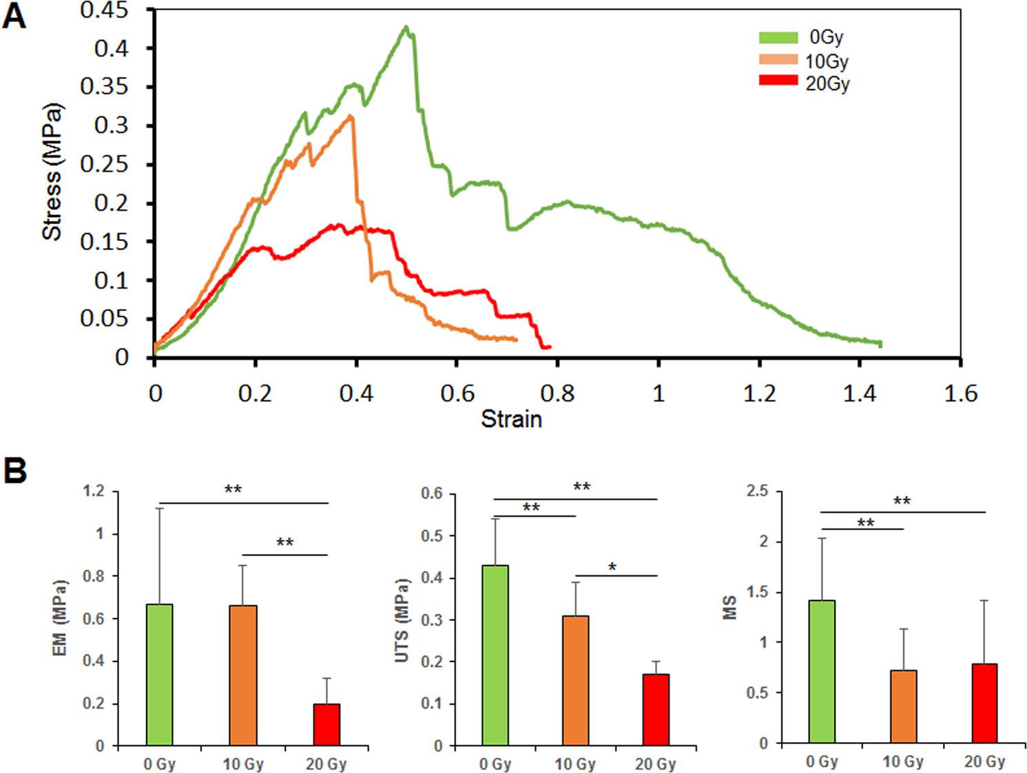 Short-term influences of radiation on musculofascial healing