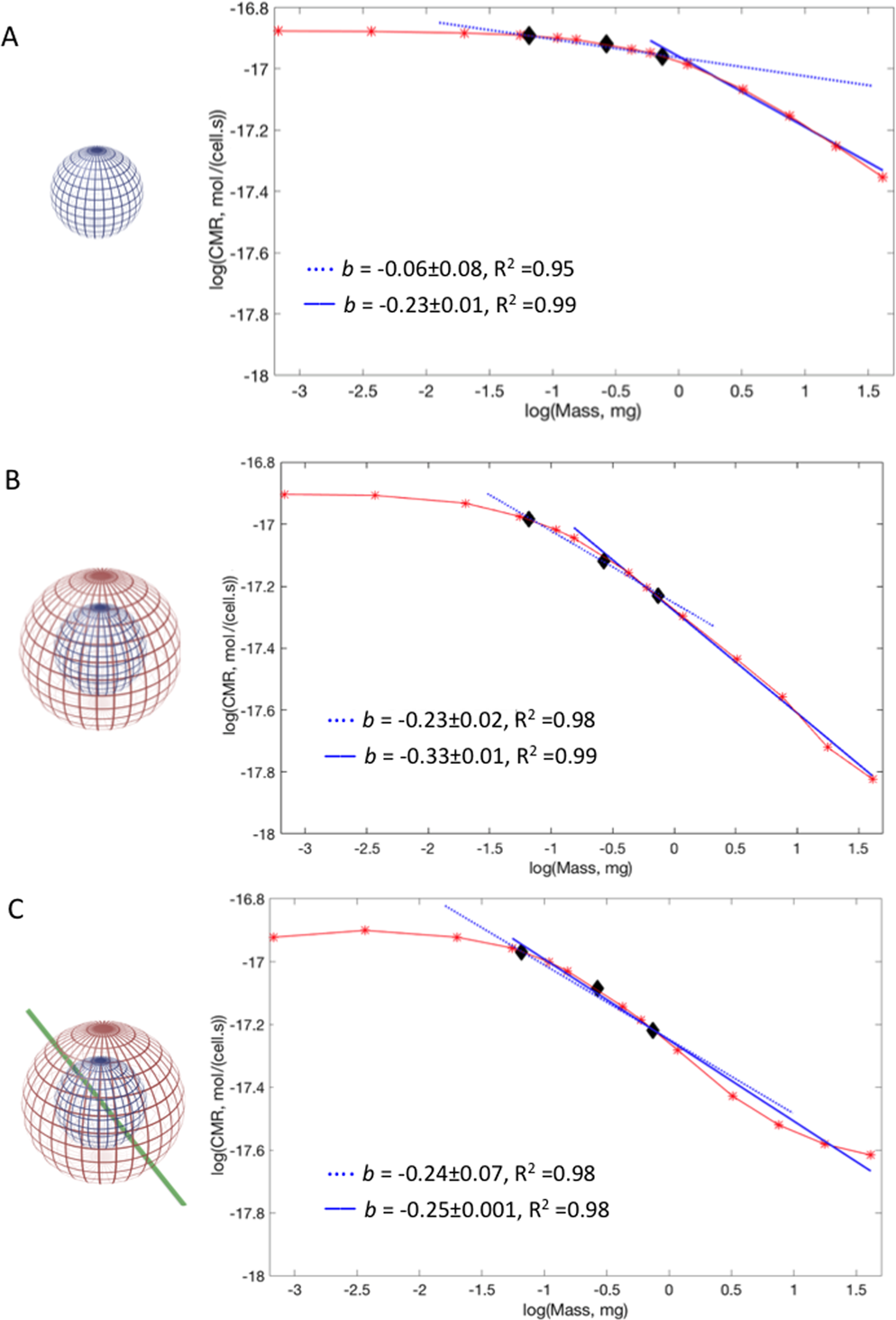 Allometric Scaling of physiologically-relevant organoids