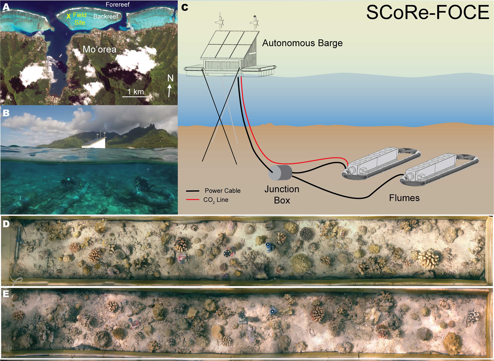 Ocean Acidification Effects On In Situ Coral Reef Metabolism