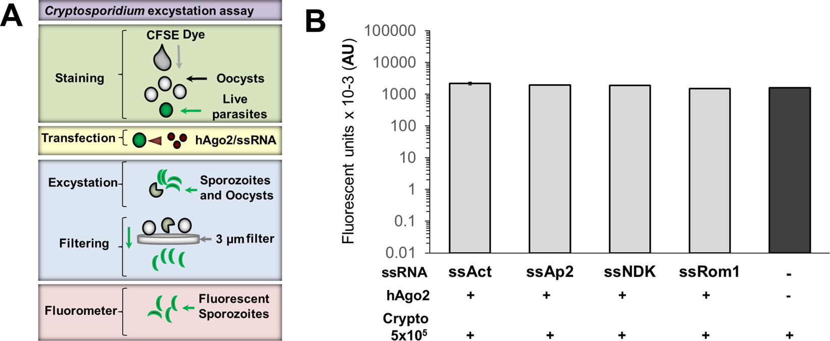 Systematic gene silencing identified Cryptosporidium