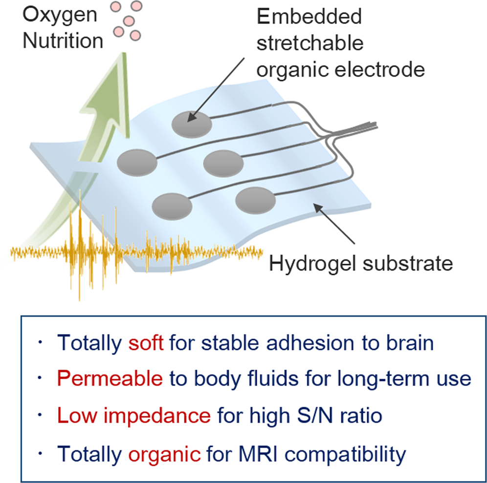 Hydrogel Based Organic Subdural Electrode With High