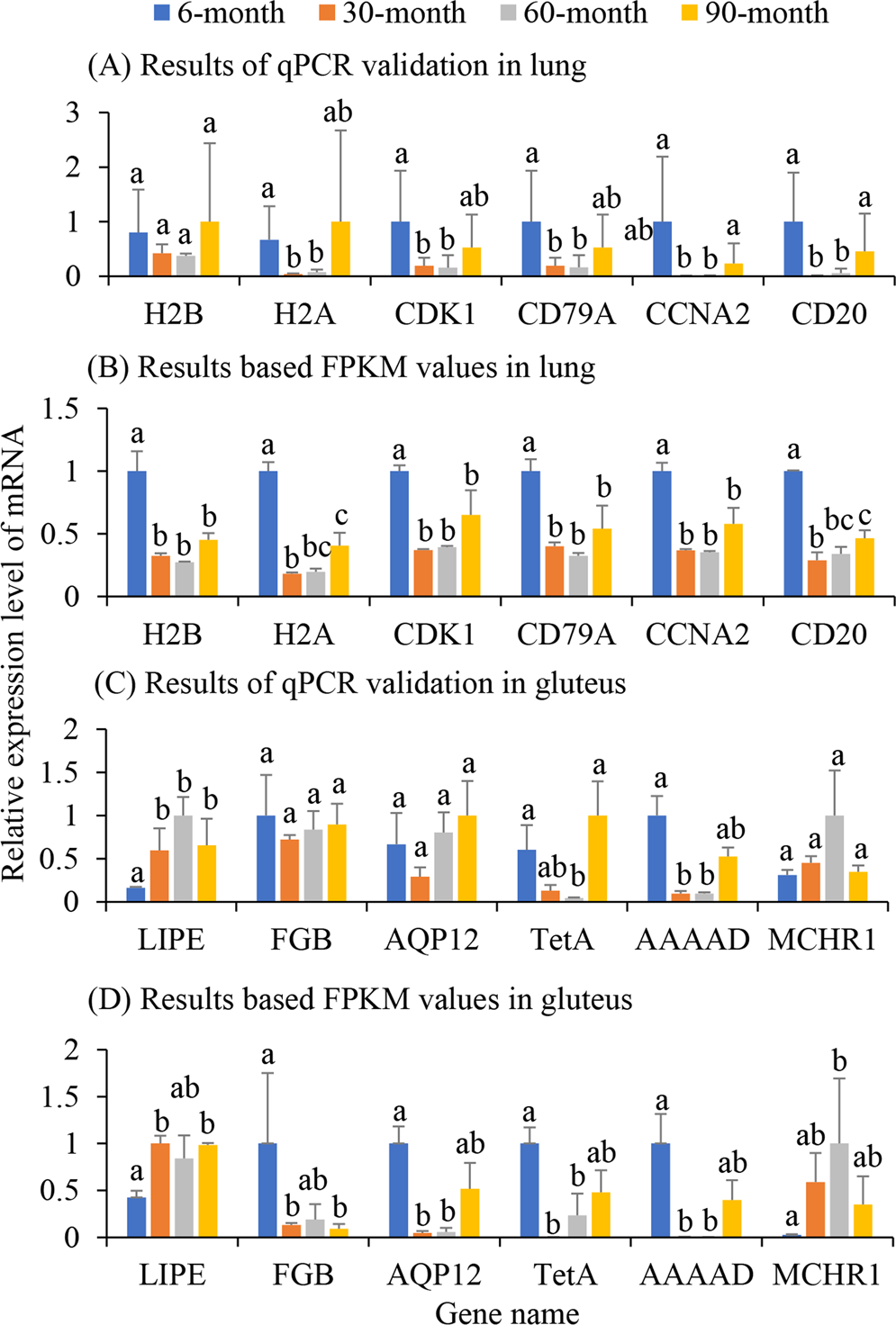 Comparisons of lung and gluteus transcriptome profiles
