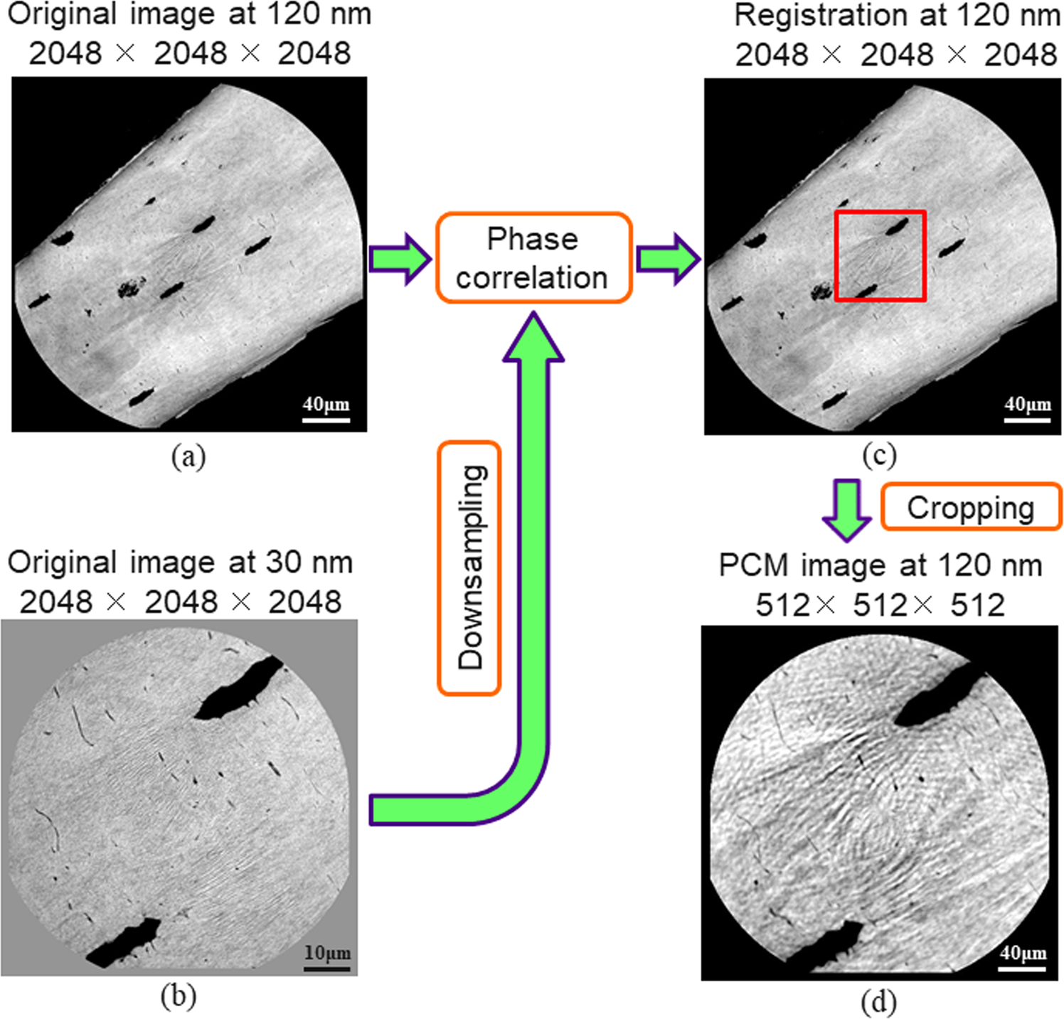 Table A Langer D Angle assessment of the human bone lacuno-canalicular network at