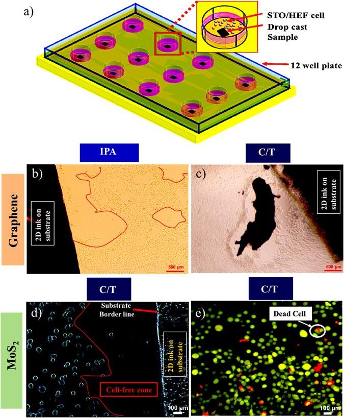 Biocompatible, large-format, inkjet printed heterostructure MoS 2