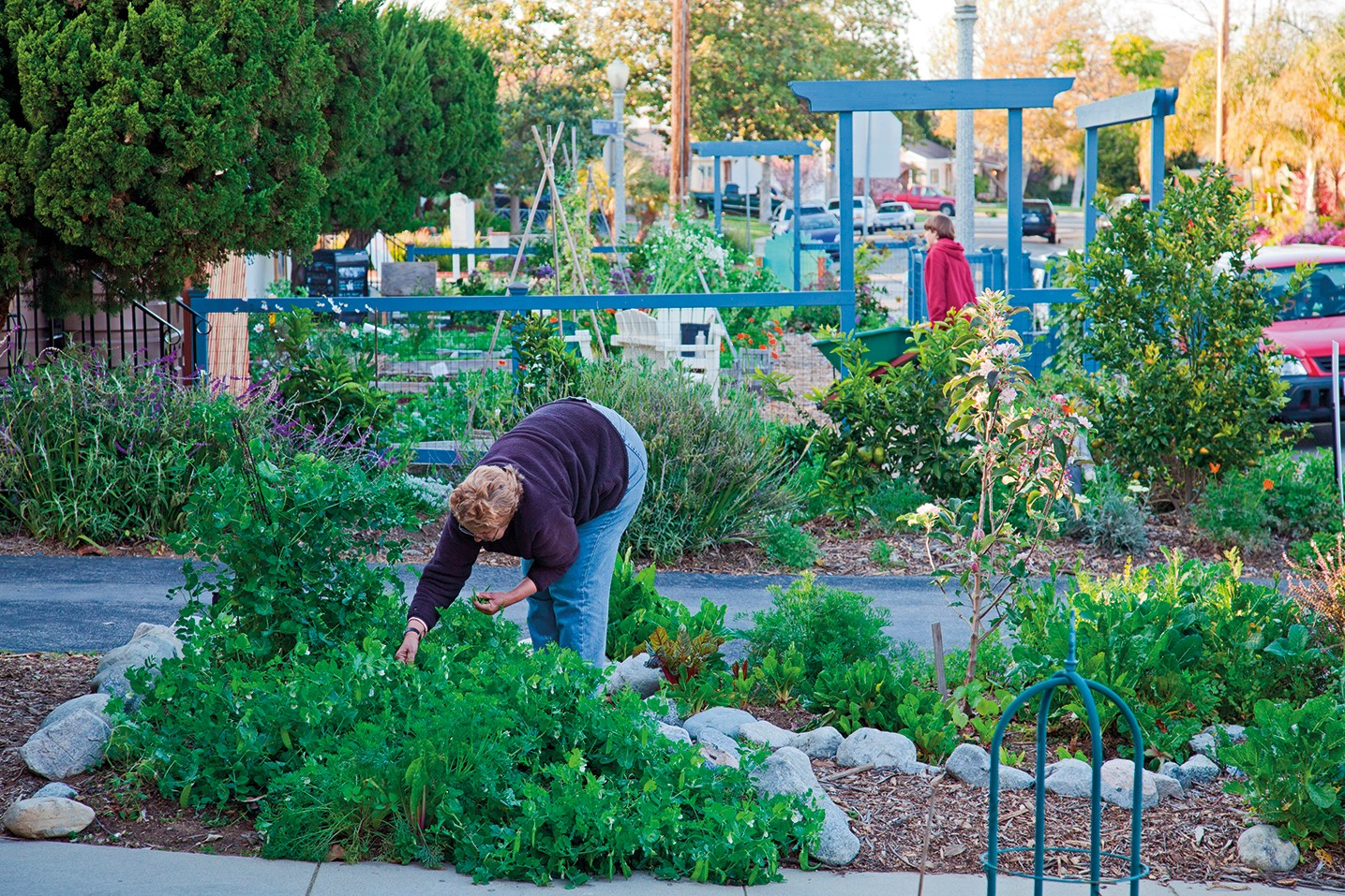 Urban Agriculture Growth In Us Cities Nature Sustainability