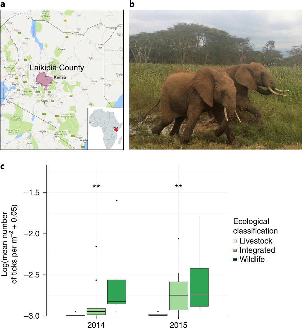 Consequences of integrating livestock and wildlife in an African