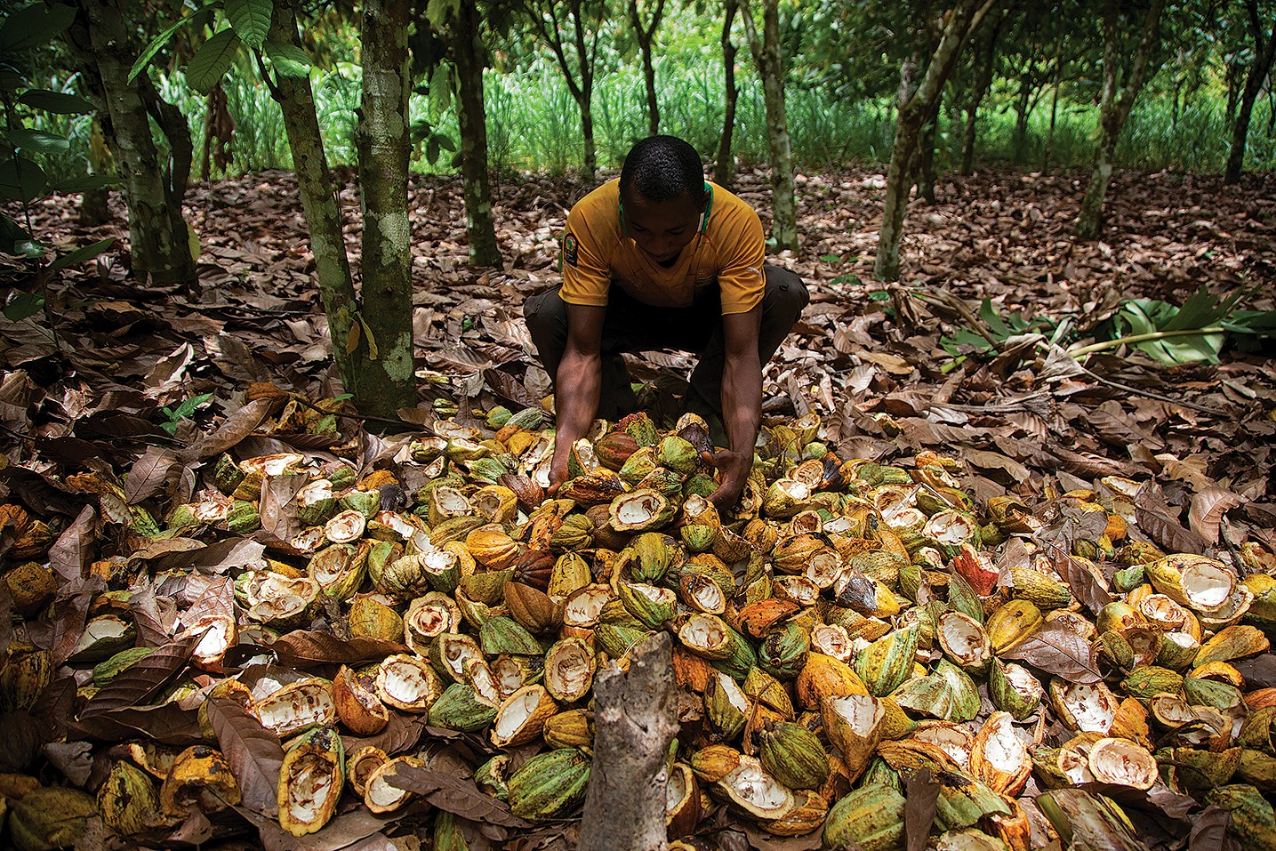 Fairtrade does not walk the talk