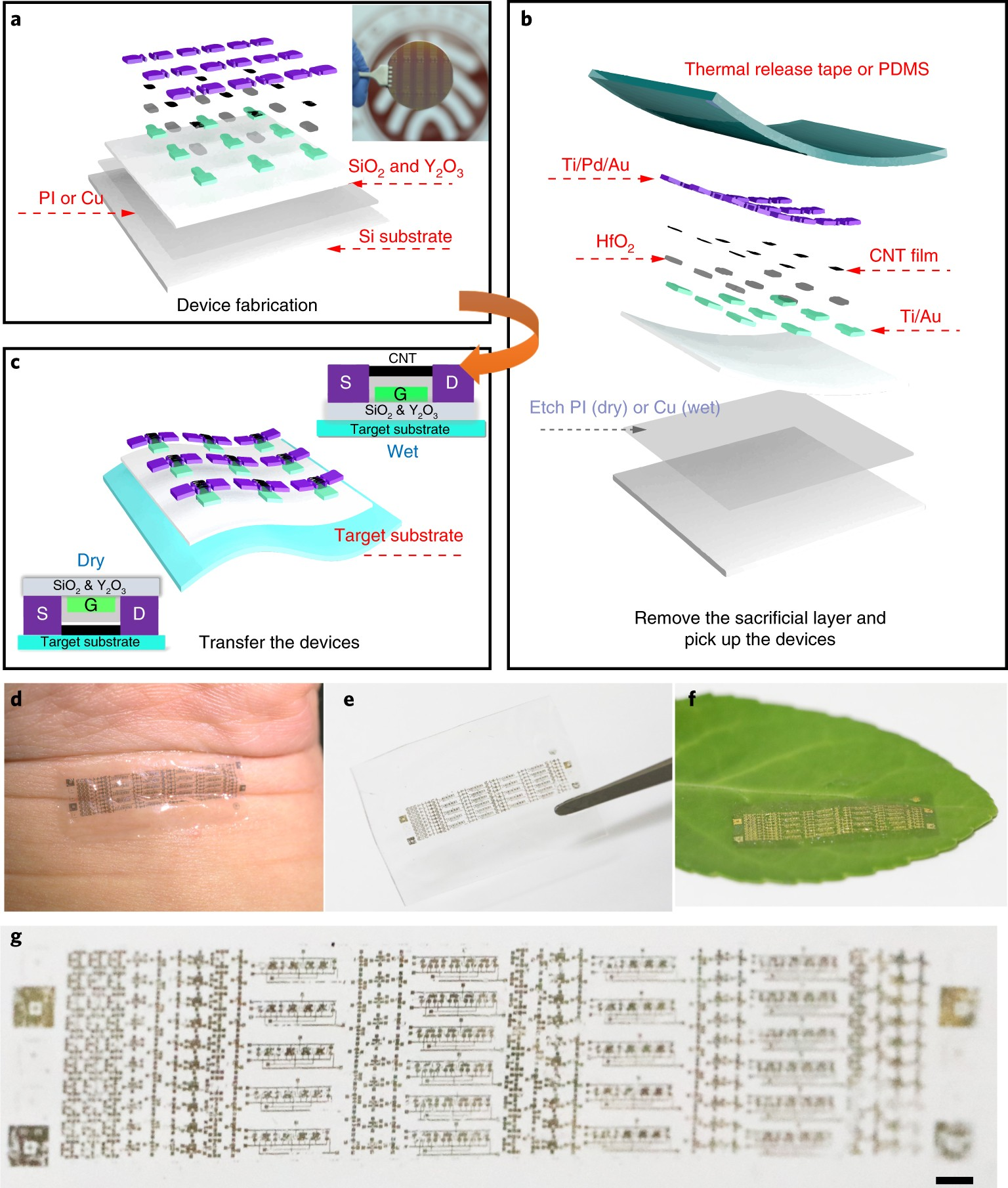 Low Power Carbon Nanotube Based Integrated Circuits That Can Be Mini Logic Probe With Transistor Circuit Transferred To Biological Surfaces Nature Electronics