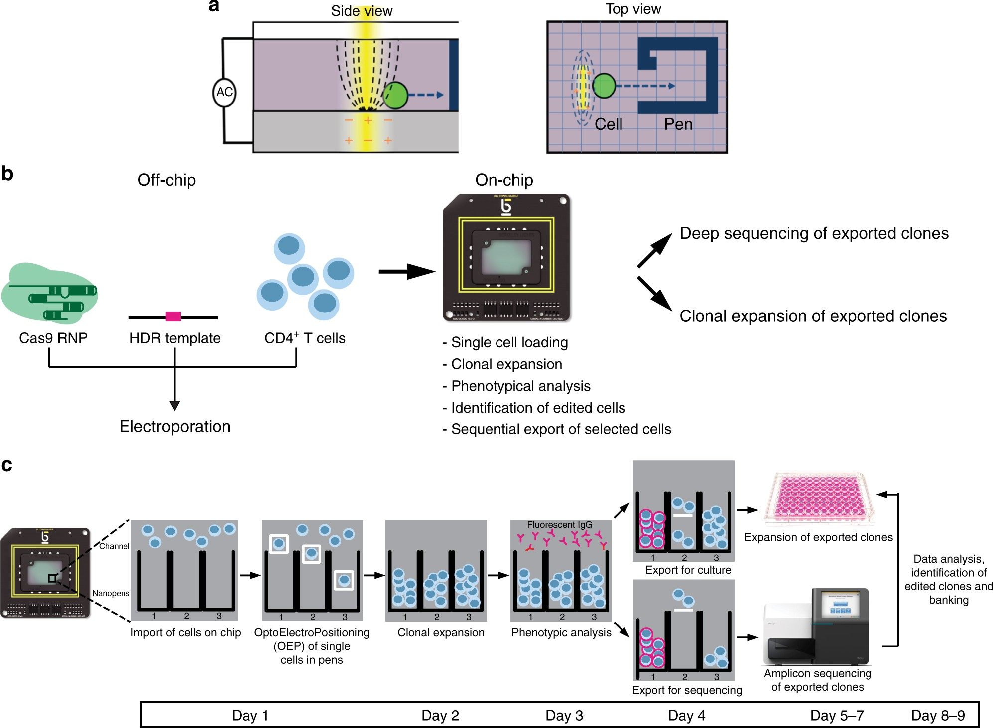 Light-activated cell identification and sorting (LACIS) for