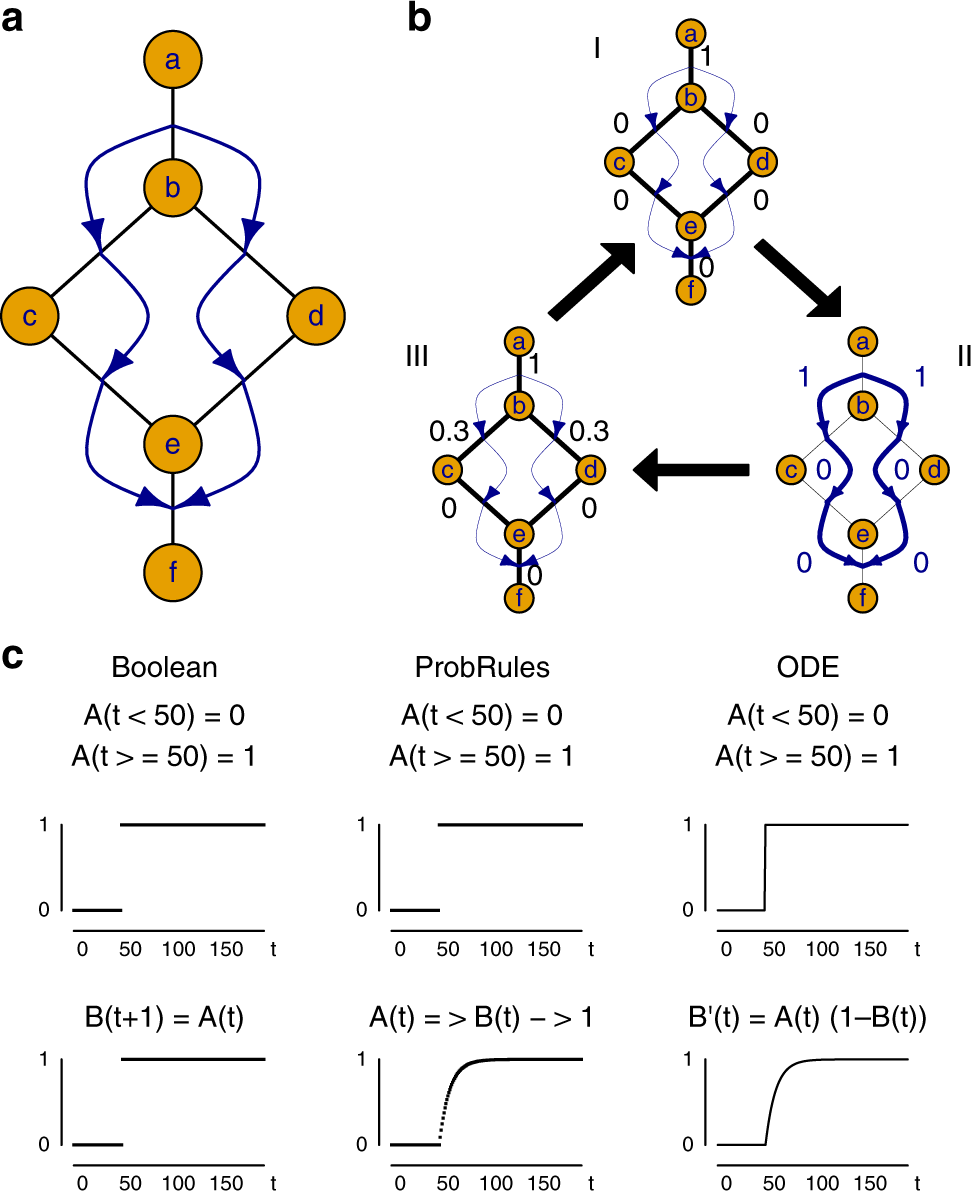 Representing dynamic biological networks with multi-scale