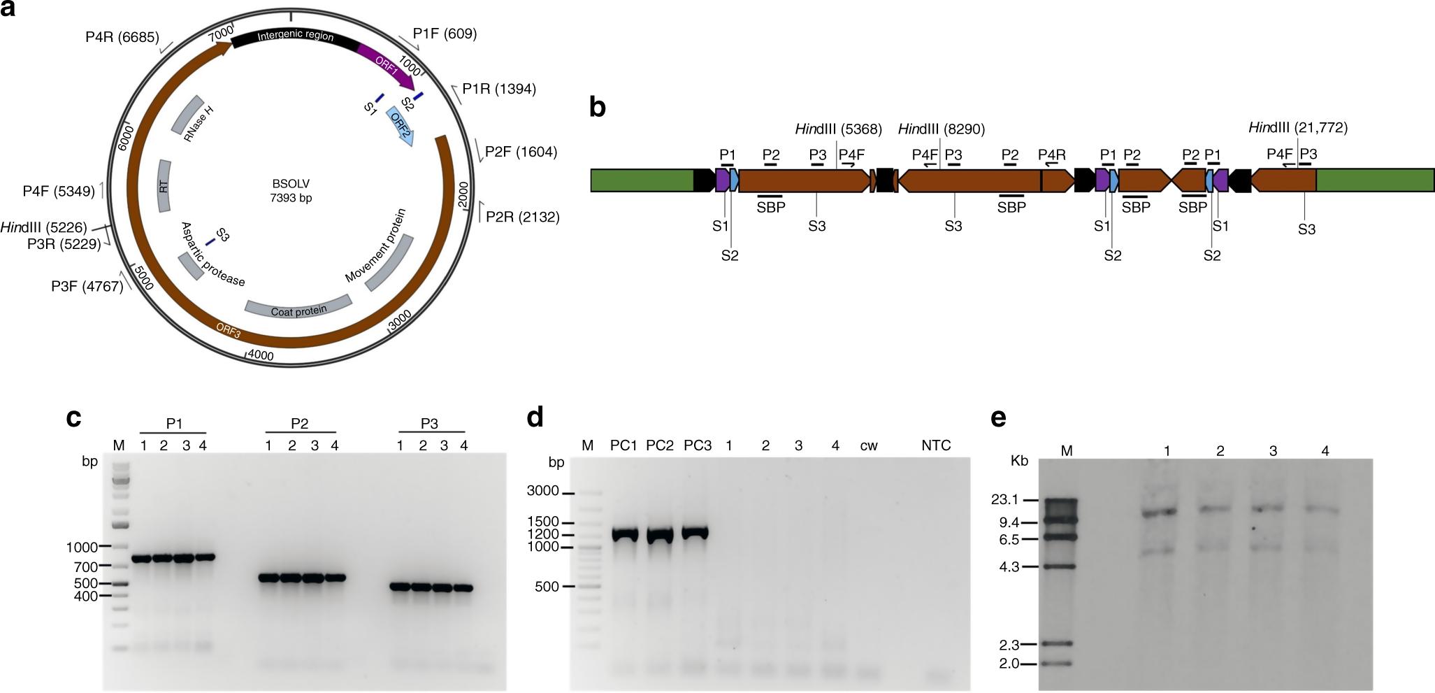 CRISPR/Cas9 editing of endogenous banana streak virus in the B