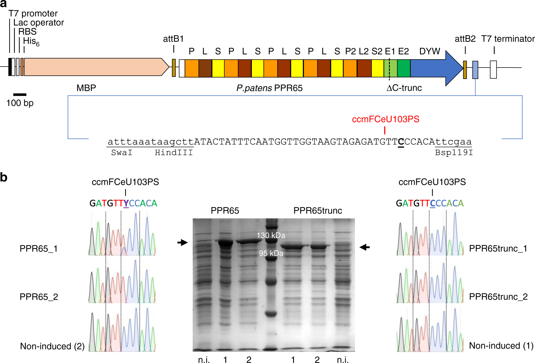 Plant-type pentatricopeptide repeat proteins with a DYW