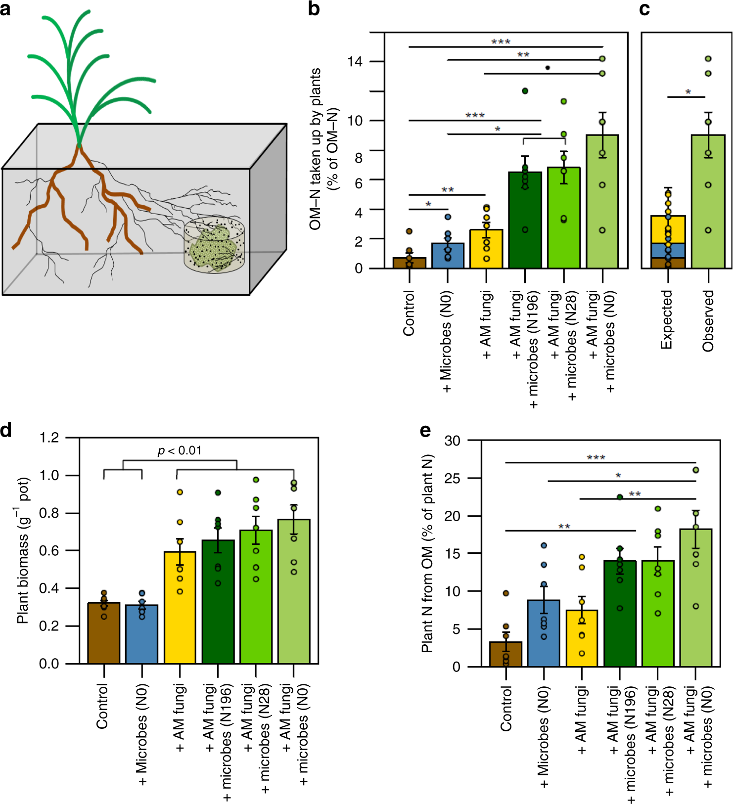 Synergies between mycorrhizal fungi and soil microbial