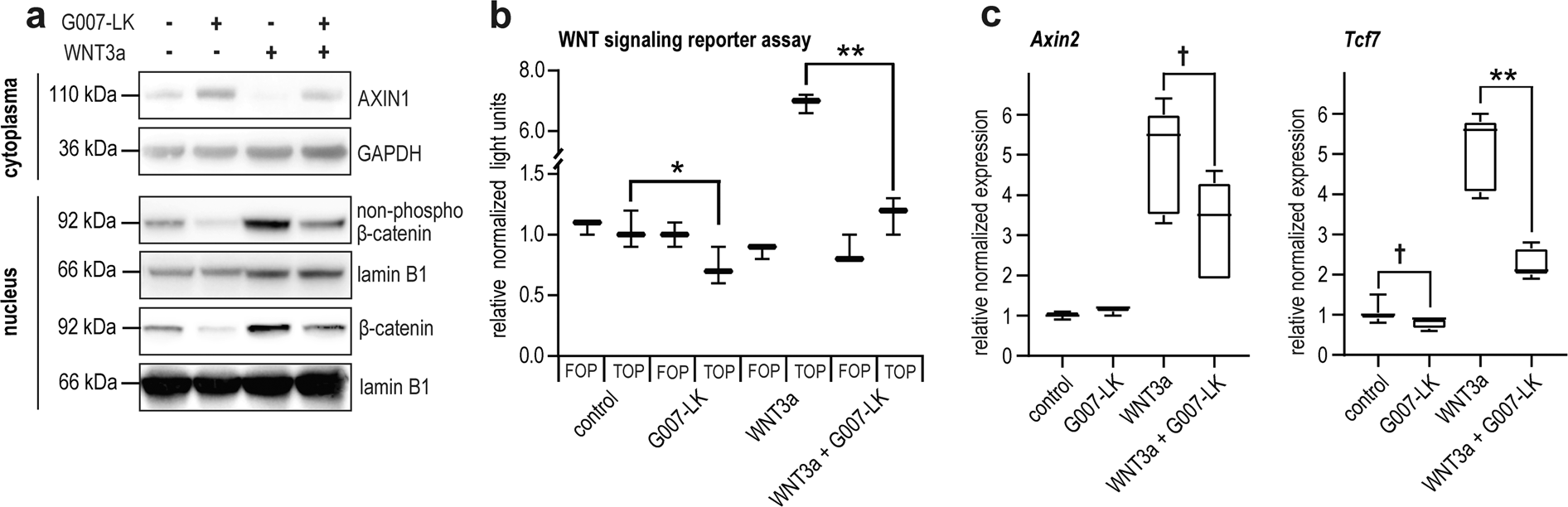 Tankyrase Inhibition Sensitizes Melanoma To Pd 1 Immune Checkpoint Blockade In Syngeneic Mouse Models Communications Biology
