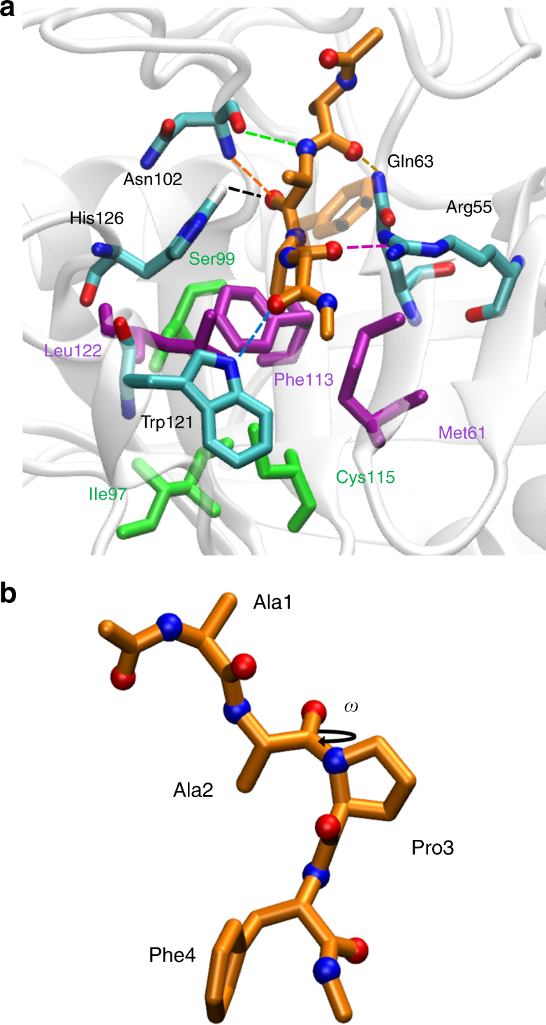 Allosteric effects in cyclophilin mutants may be explained
