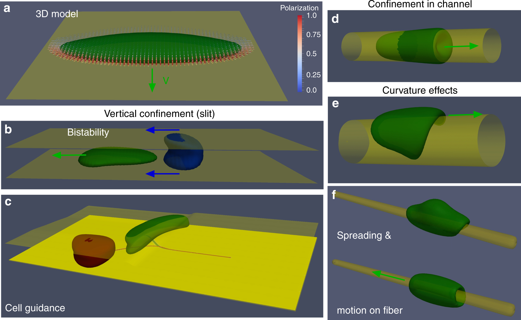 Confinement and substrate topography control cell migration in a 3D