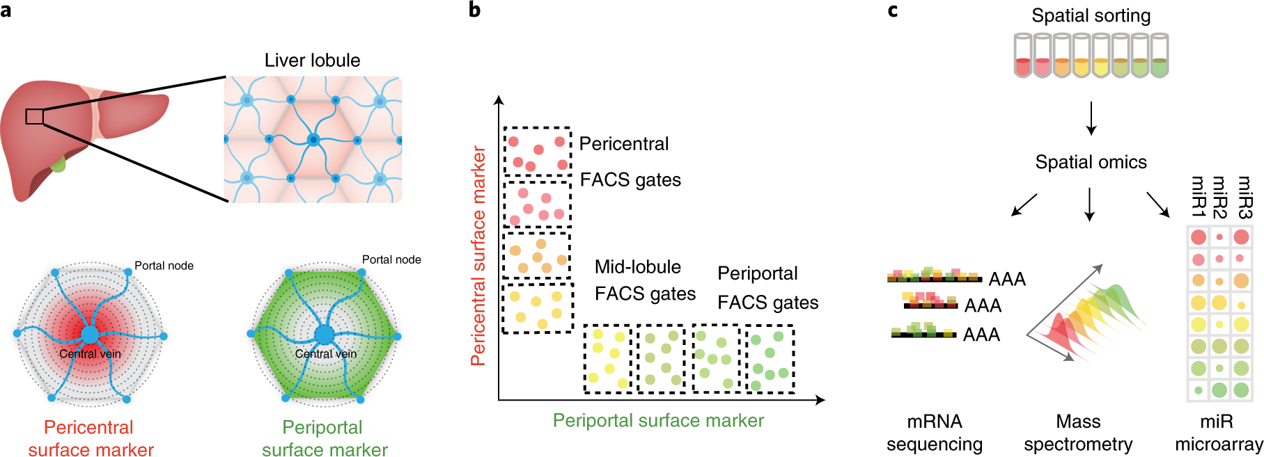 Spatial sorting enables comprehensive characterization of liver zonati